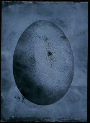 Fertility. 59,4 × 59.4 cm. Edition 20.